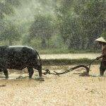 Zojirushi Rice Cooker Europe : Notre avis