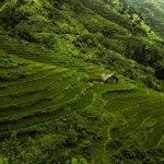 Cuiseur Riz Japonais : Acheter au meilleur prix