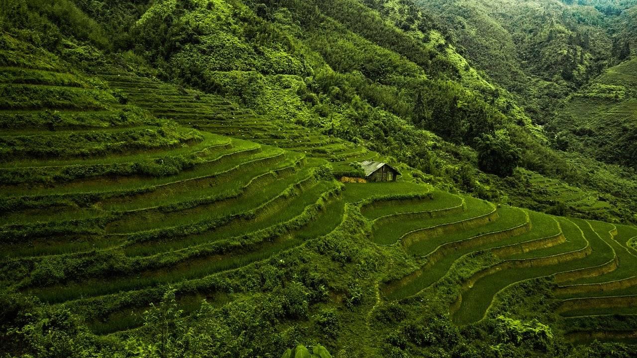 asie, vietnam, riz paddy
