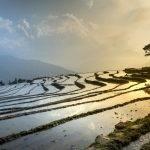 Rice Cooker Zojirushi France : Prix et Avis