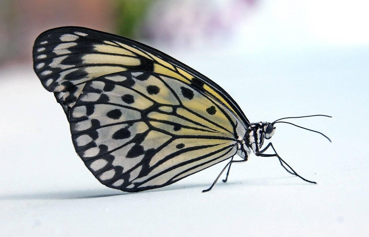 papillon, cerf volant de papier, macro