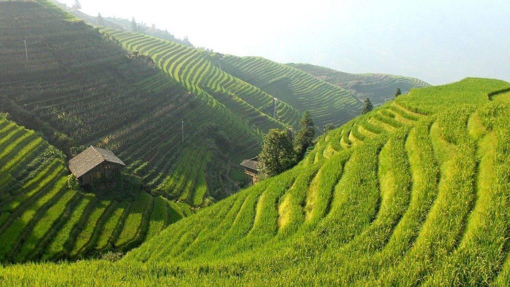 chine, rizières en terrasses, paysage