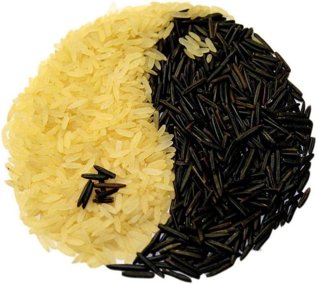 le riz, yin et yang, manger