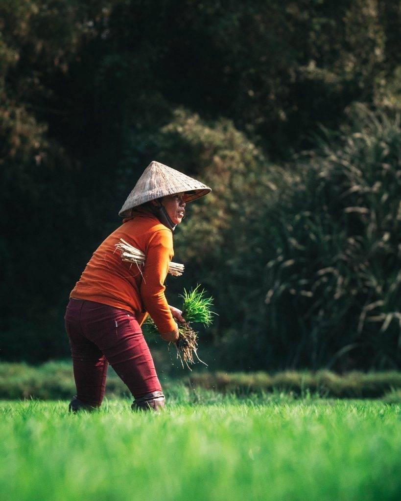 agriculteur, agriculture, récolte