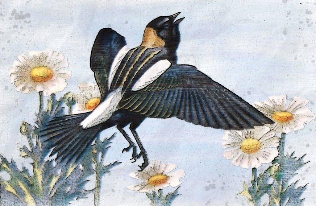 bobolink oiseau, riz oiseau, riz