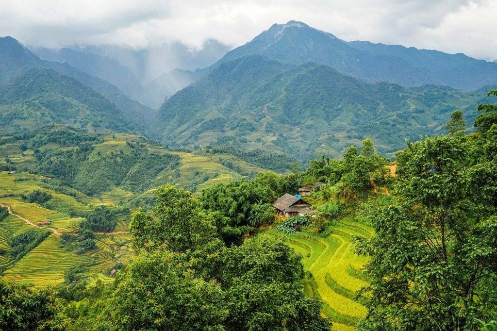 champs de riz, esquiver, petit appartement