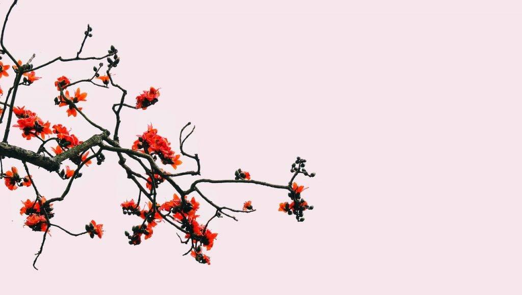 fleur, riz, temple