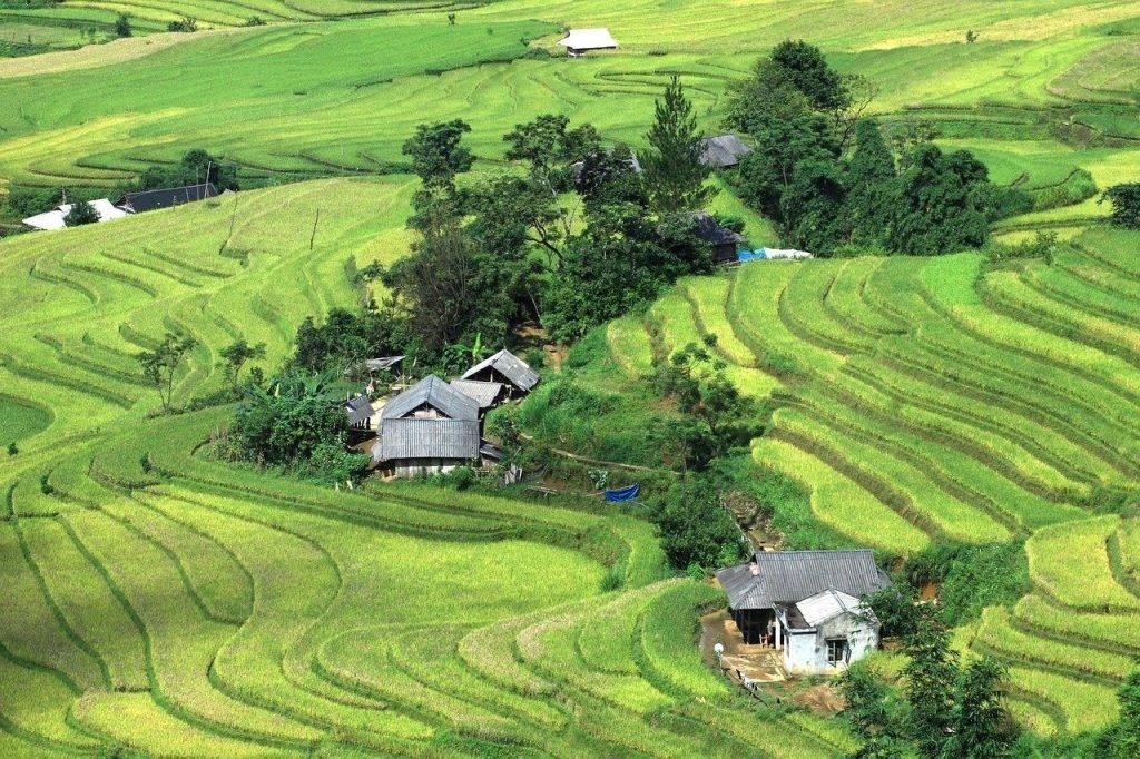 riz, champ, le vietnam paysage