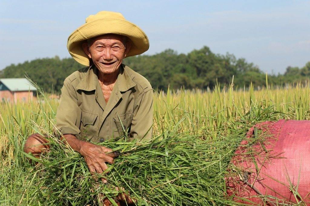 agriculteur, récolte, l'homme