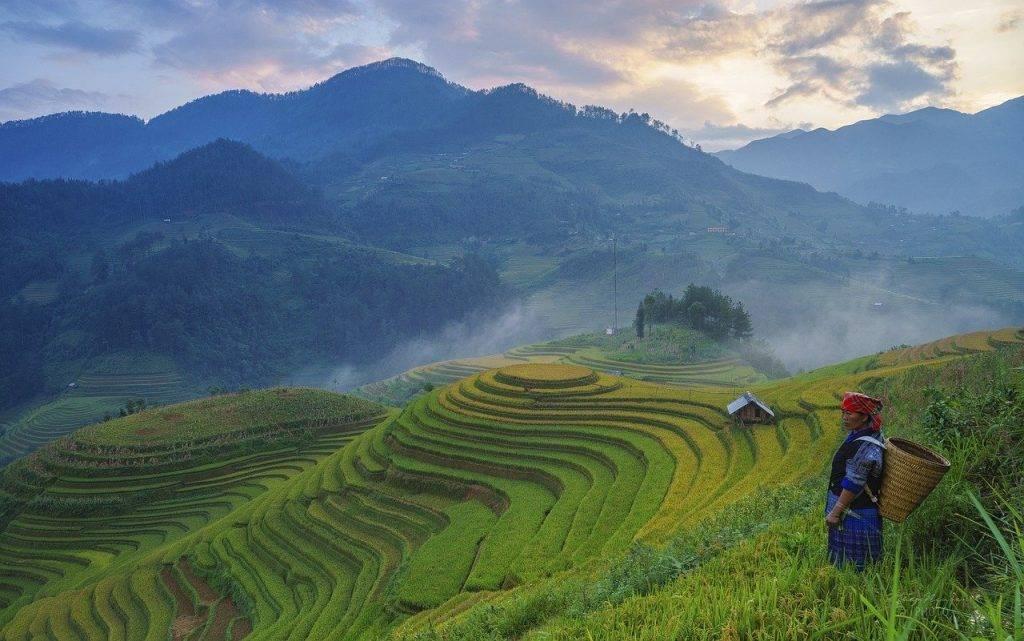 agriculteur, rizières en terrasses, montagnes