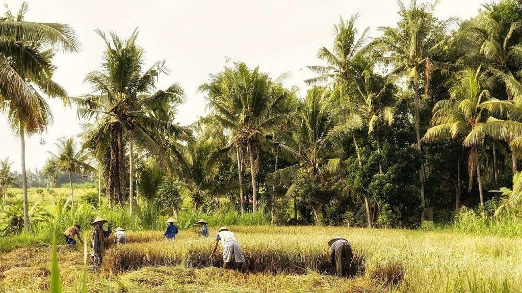 indonésie, bali, sur le terrain