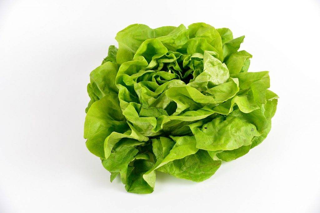 salade, verdure, légumes