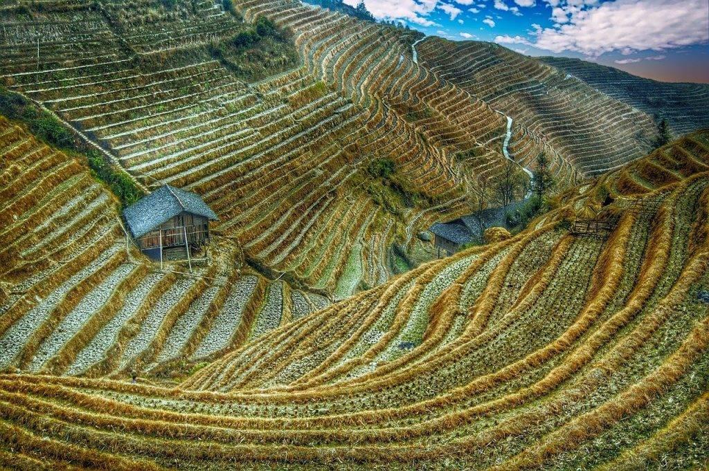 champ de riz, la chine, asie