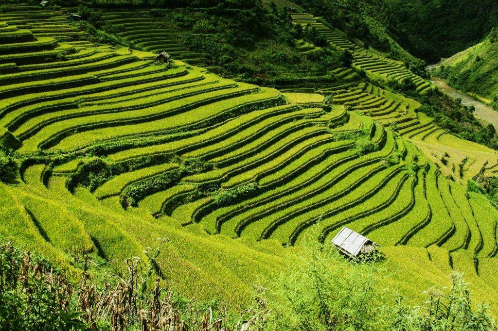 rizières en terrasses, champs de riz, mu cang chai