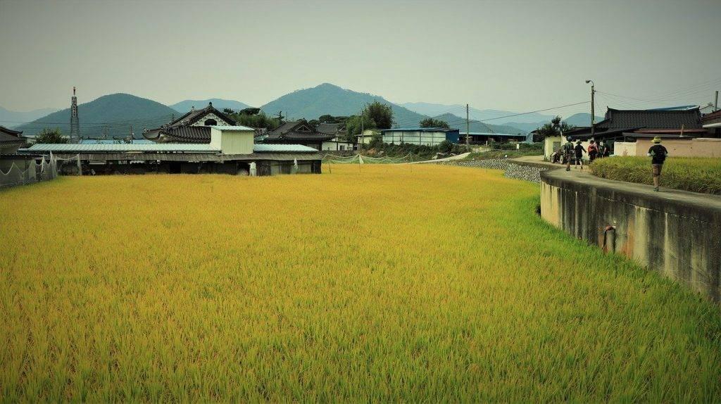 riz, automne, météo