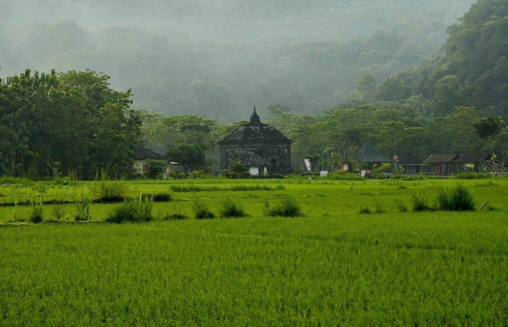 paysage nature, banyunibo temple patrimoine, temple de l'histoire du riz