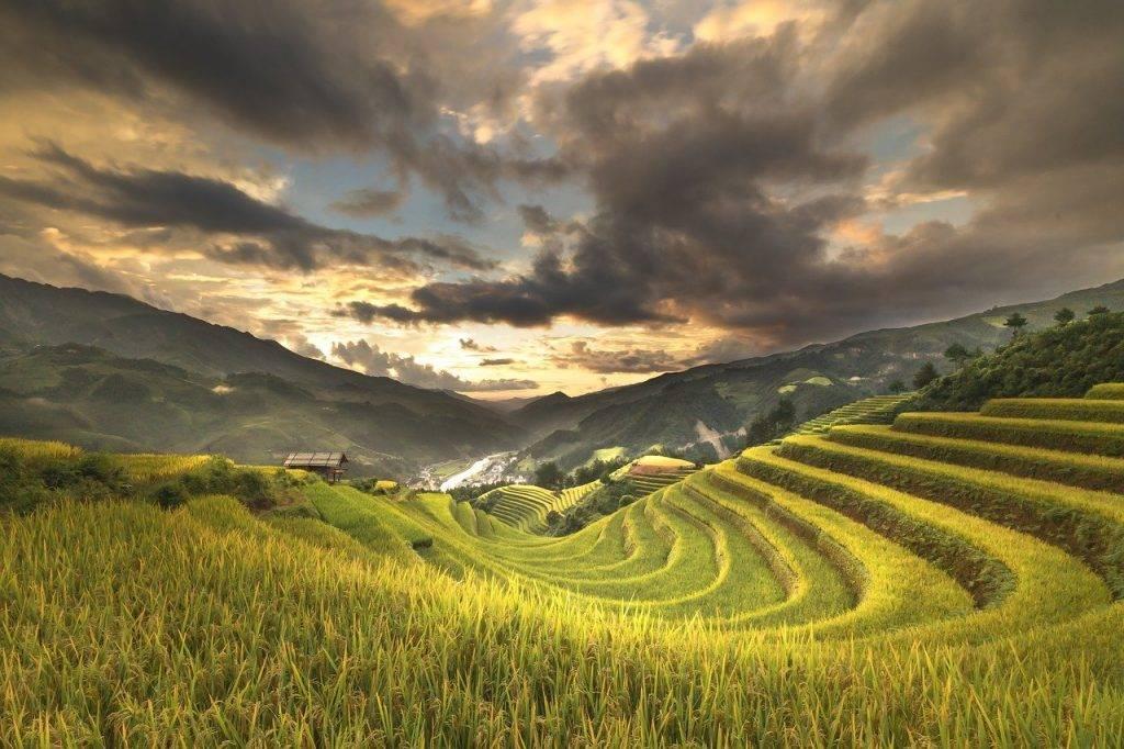 viêt nam, terrasses, riz