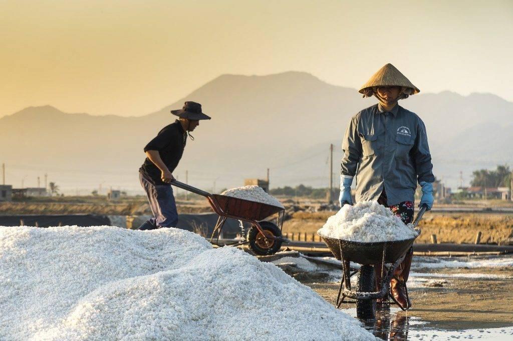agriculture, l'asie, conique