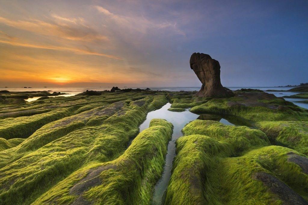 côte, point de riz, province