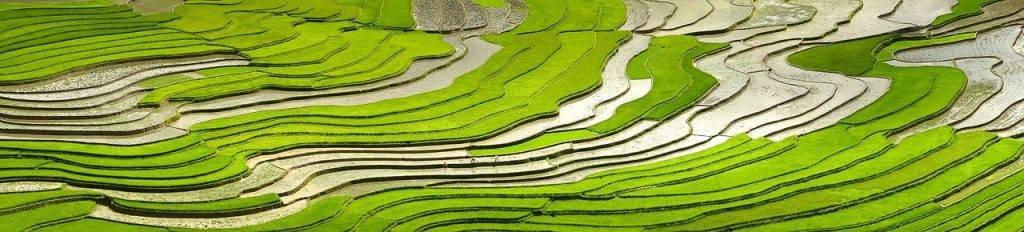 saison, versez de l'eau, transplantés riz
