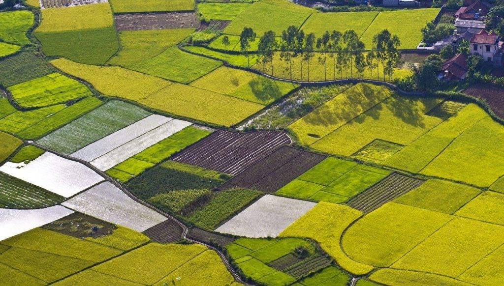 domaine, paddy, riz nươcd