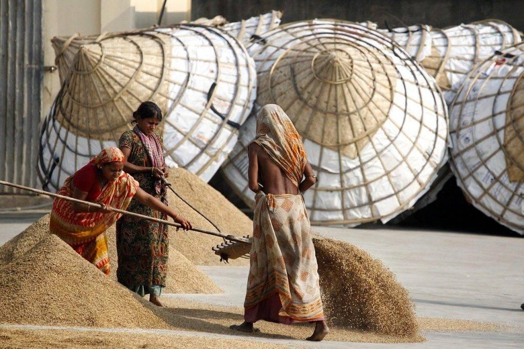riz, femmes, bangladesh