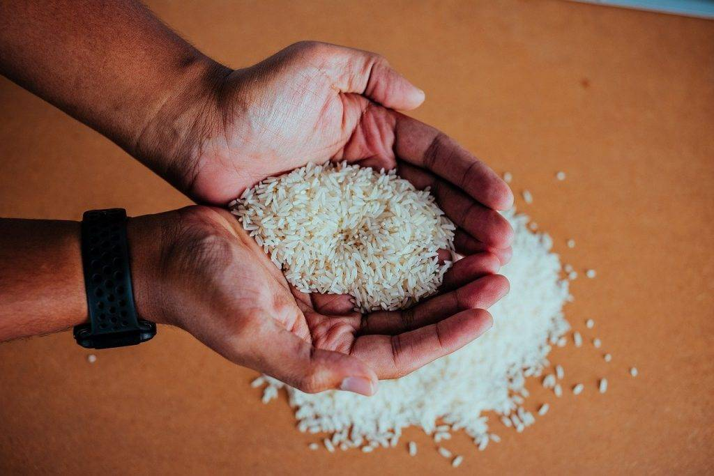 riz, paddy, manger