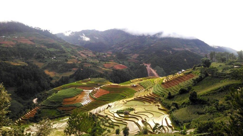 terrasses, champ de riz, nature