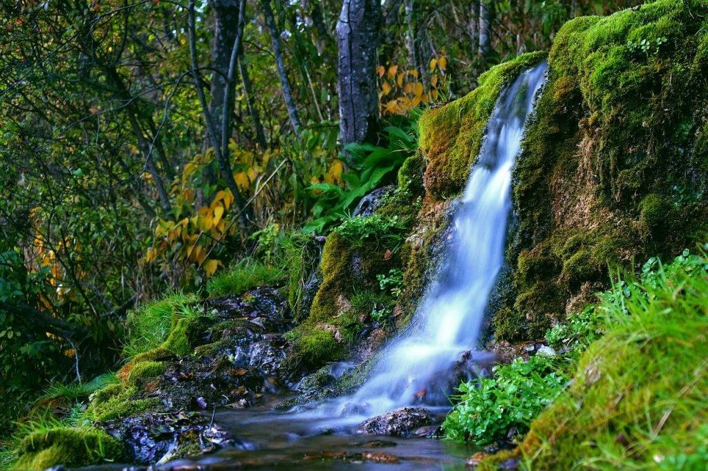 forêt, nature, crique