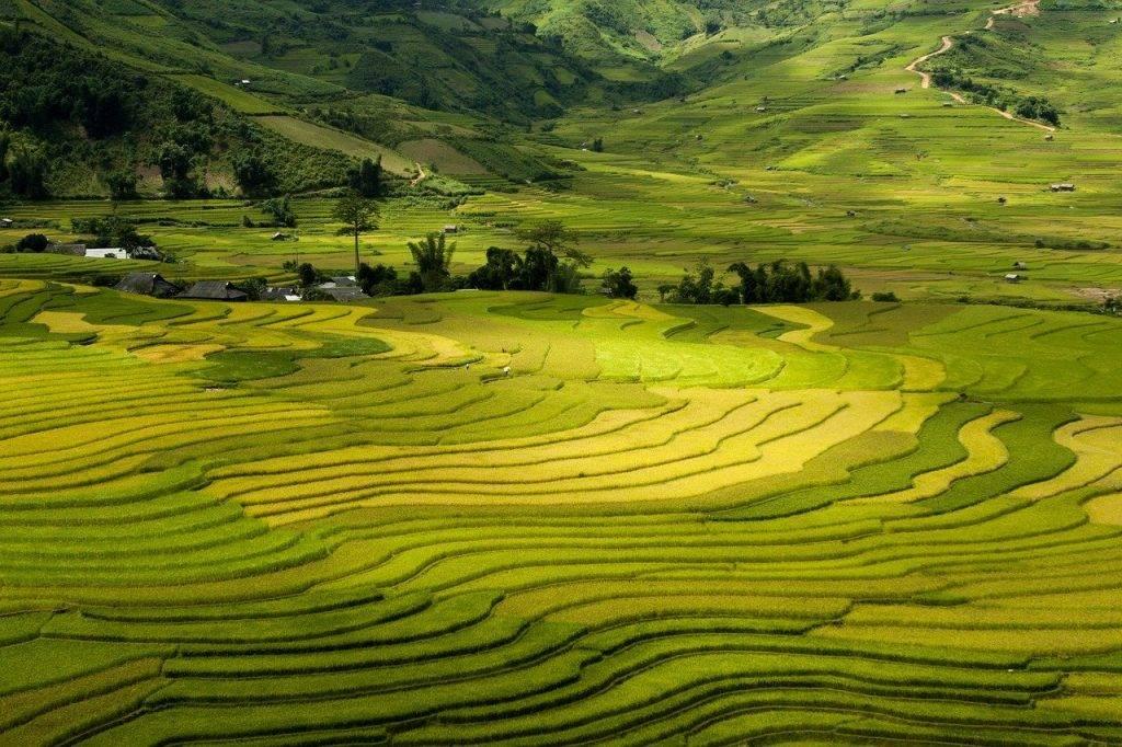 terrasses, tay bac, vietnam