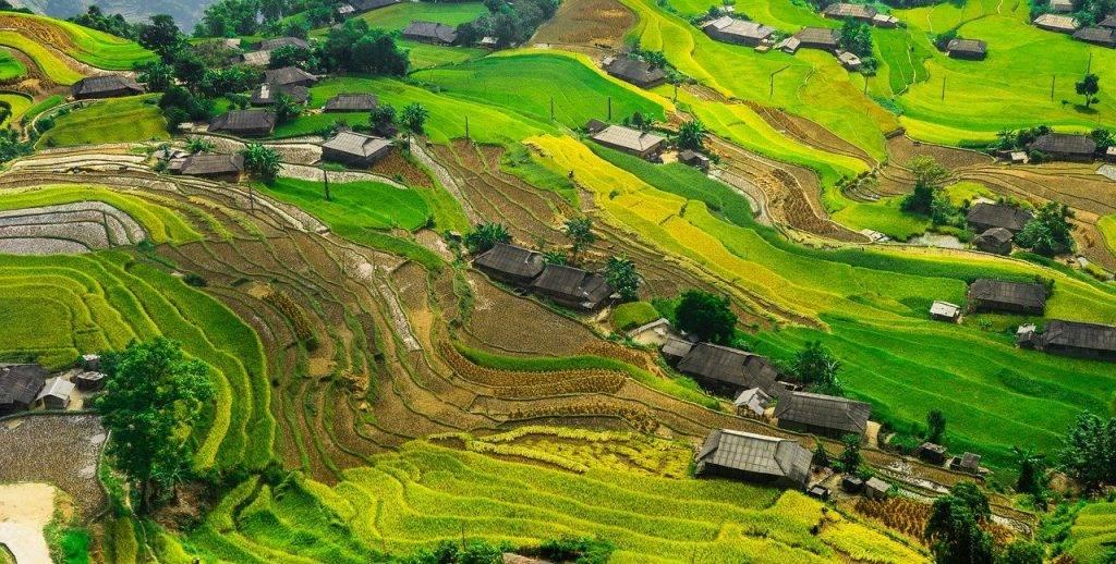 paddy, rizière, riz