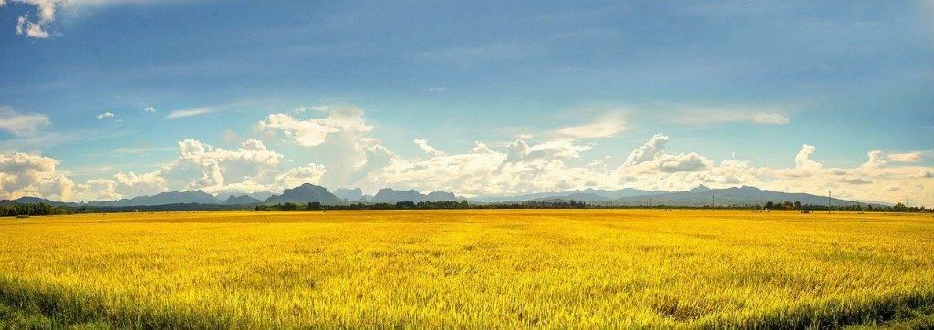 vietnam, agriculture, ferme