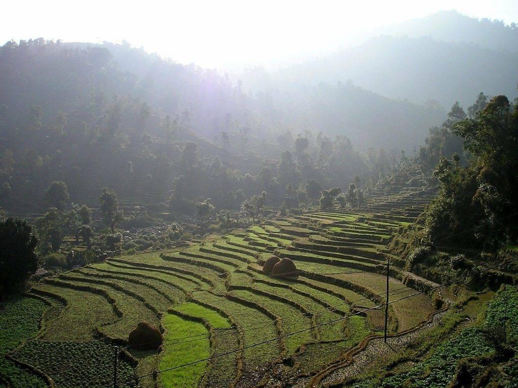 népal, rizières en terrasses, terrasses