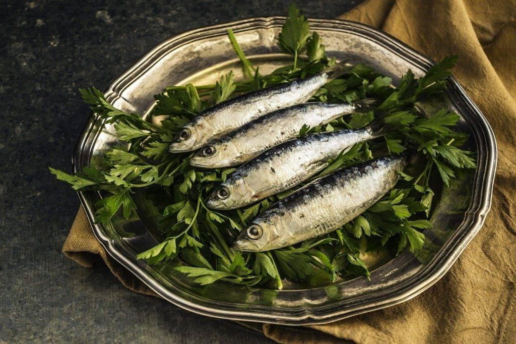 sardines, poissons, le déjeuner