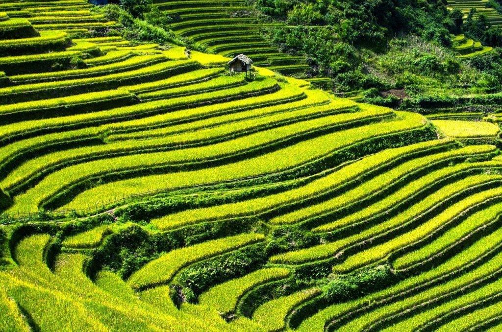 rizières en terrasses, champs de riz, champs en terrasses