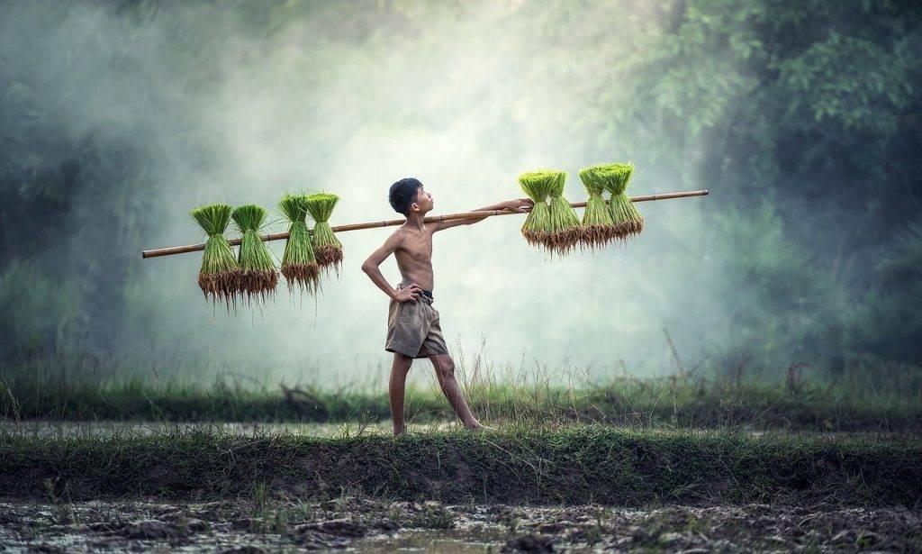 agriculture, asie, cambodge