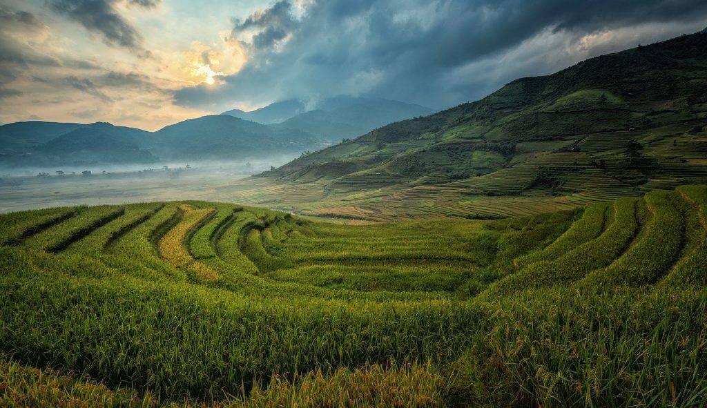 agriculture, asie, no de cat