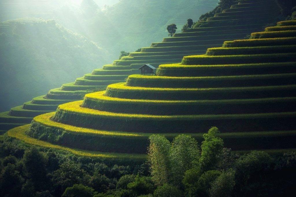 plantation de riz, thaïlande, riz